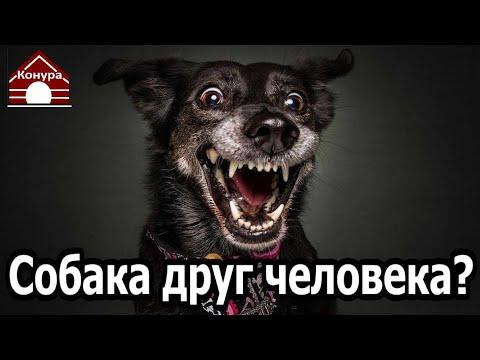 Вопрос: Зачем люди заводят собак, если они их не любят?