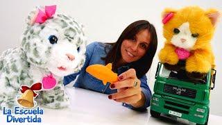 La Escuela Divertida - Gatitos de juguete. Vídeo para niños.
