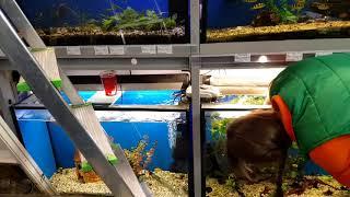 Купили новых рыбок в аквариум Самвела