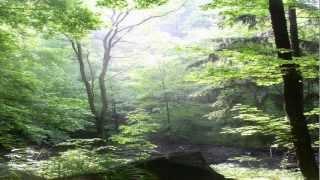 Future World Music - Spiritual Awakening [NEW ALBUM MILLENNIUM]