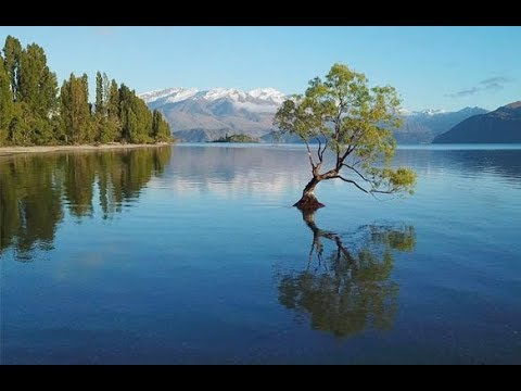 Wanaka Tree & Lake, New Zealand