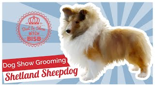 Dog Show Grooming: How to Groom a Shetland Sheepdog