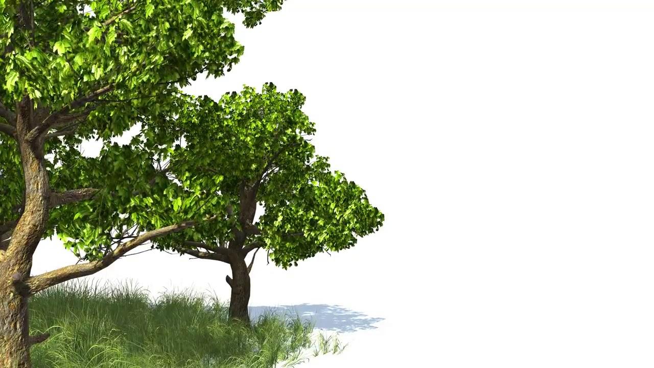 Деревья анимация в картинках, открытку марта