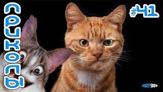 Приколы с котами и кошками 2019 Смешные коты и кошки 2019 Приколы с котами до слёз #41