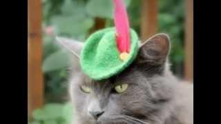 Коты в шляпе