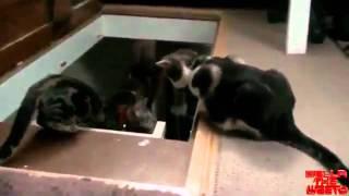 Кот прикольнулся над другим котом