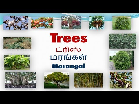 Vocabulary about Trees with pictures including Tamil meaning | Spoken English