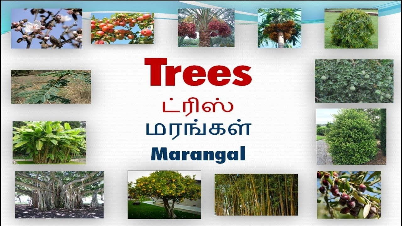 Vocabulary About Trees With Pictures Including Tamil Meaning