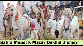 Bakra Mandi Lalukhet - Bakra Buy Karne K Mazey Dekhin