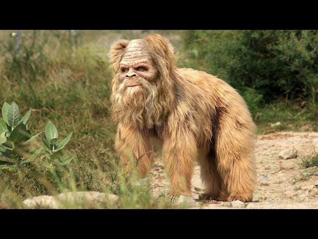 10 انواع من القرود المدهشة والغريبة في العالم