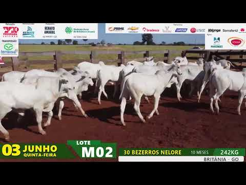 LOTE M02