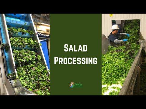 Salad Processing Creating Spring Mix