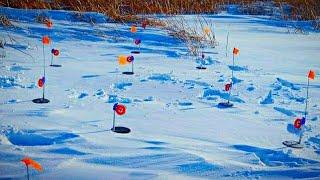 Бешеные поклевки в ужасный мороз