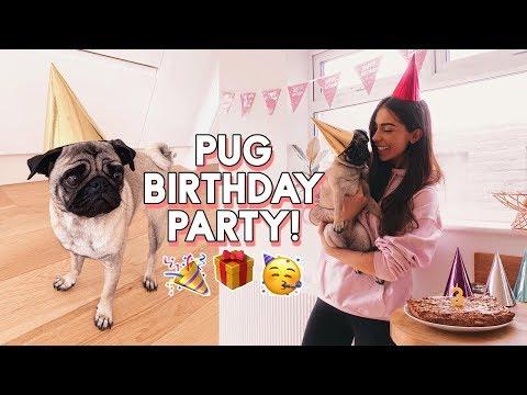 PUG PARTY! BEANS' BIRTHDAY   Baking A Dog Birthday Cake & Buying Everything My Dog Touches