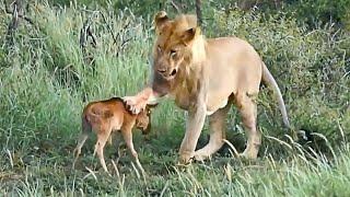 """Животные спасают друг друга, добрые животные в деле! Случаи, снятые на камеру """"за 5 минут"""""""