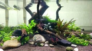 Неделя после запуска аквариума с грунтом пропант.
