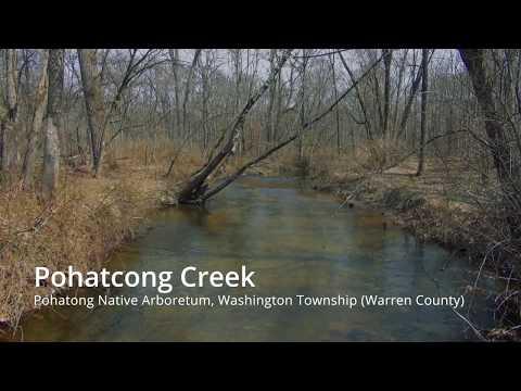 Pohatcong Creek Trout