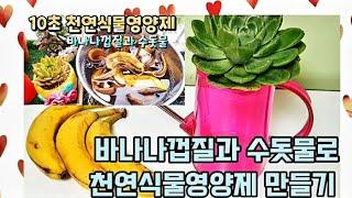 다육이 식물 영양제 만들기 과일 껍질로 식물 영양제  만들기 바나나는 필수 💖 식물을 튼튼하게 성장 시킴 그냥 물대신 줘도 됩니다 (팁 막걸리 소주 반컵을 섞어서 하심 더 좋아요