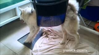 Уникальная реабилитация собаки