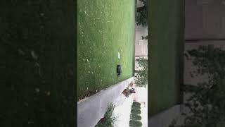 Cute grass-cutter in Prague