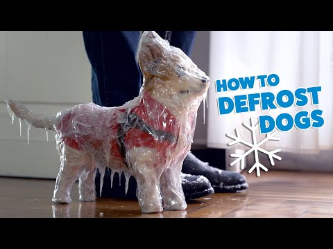 How to defrost dogs