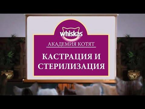 Класс коррекции (2014) — смотреть онлайн — КиноПоиск
