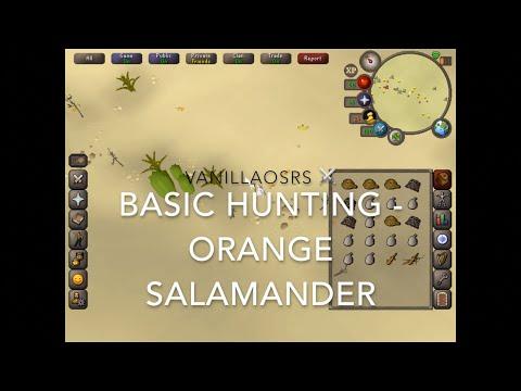 Orange Salamander OSRS Beginner Hunting Guide
