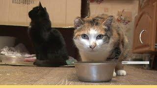 Алданские волонтеры собирают средства на приют для бездомных животных