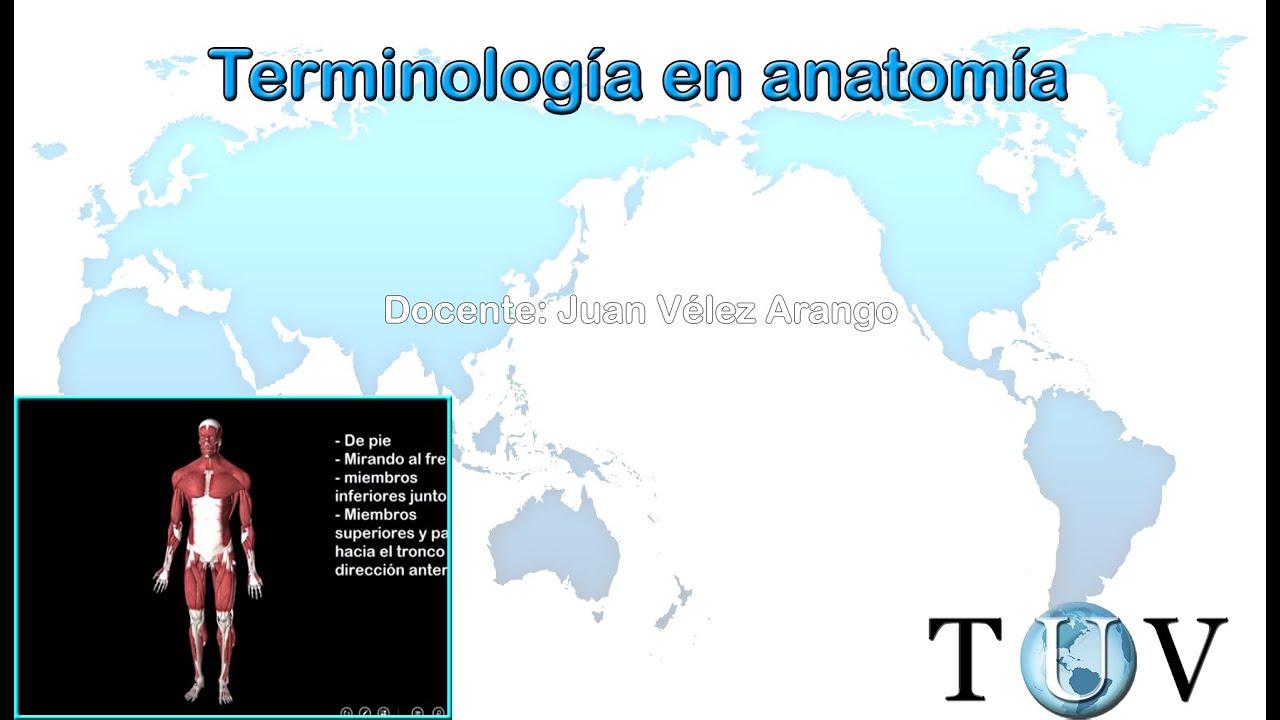Terminología anatómica y conceptos importantes - YouTube