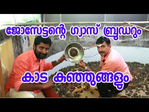 Gas quail brooder system @ Pala, Kerala [ECO OWN MEDIA] Malayalam 2018