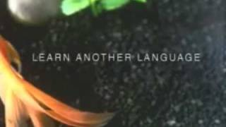 Avista Language School Commercial - Fish and Cat