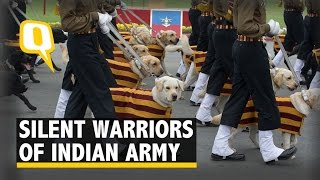 Watch The Adorable Dogs Preparing to March for Republic Day Parade