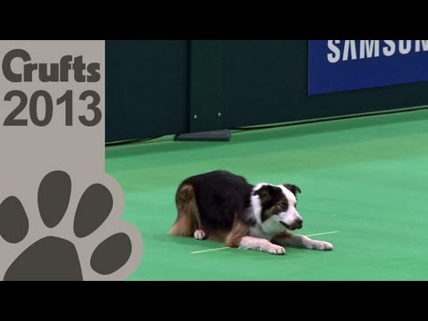 Obedience Dog Championships - Day 3 - Crufts 2013 (Alison Grestty and Double Jeopardy)