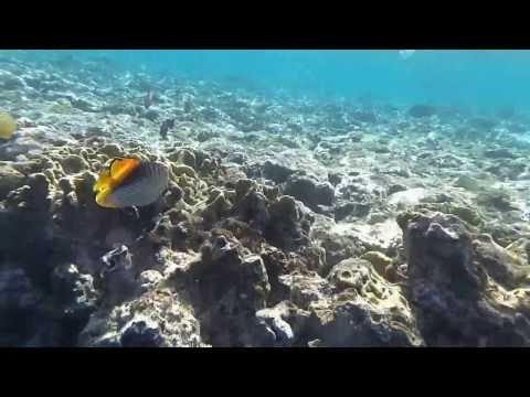 snorkeling in the Redsea.sharm El sheikh Egypt.Sharks bay.