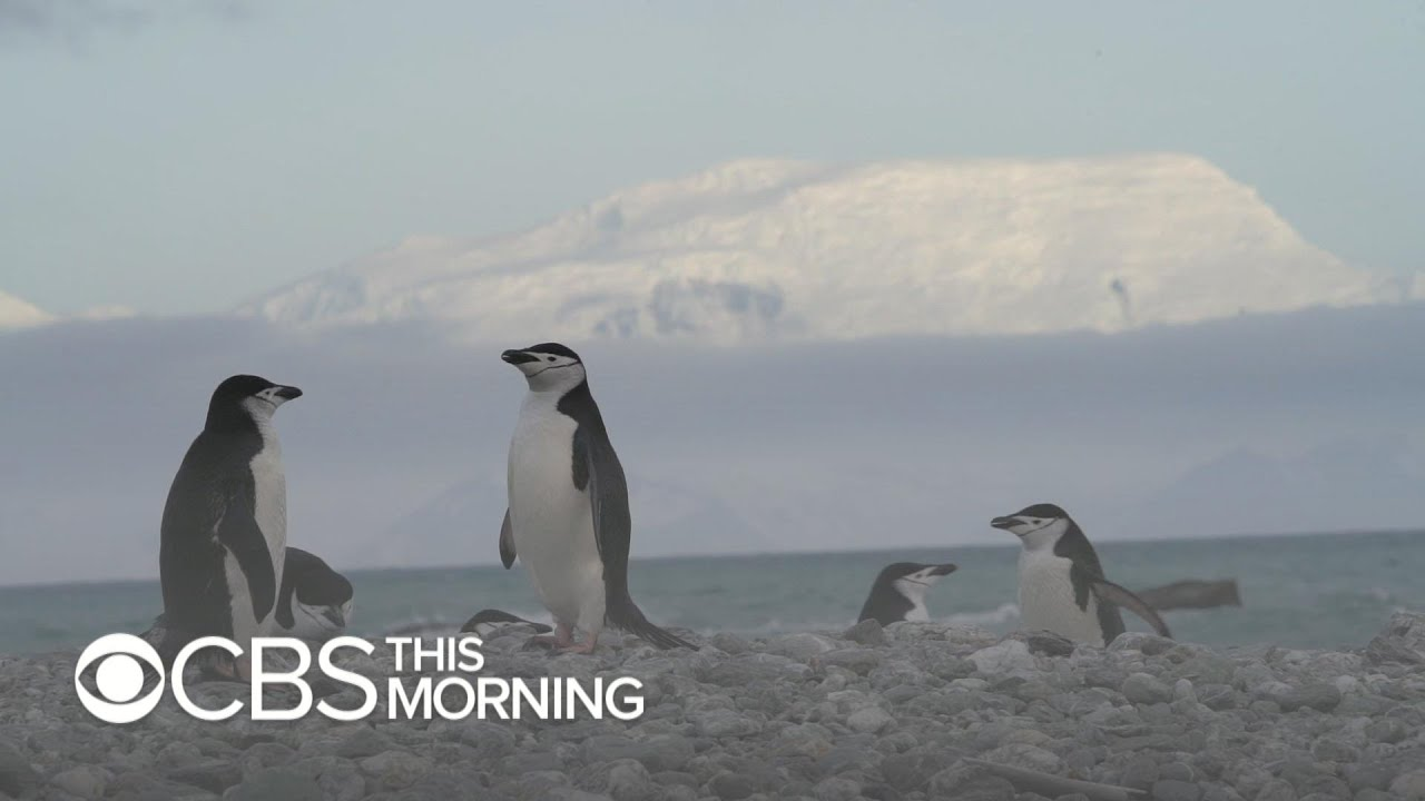 Penguin species in Antarctica hit hard by Climate Change