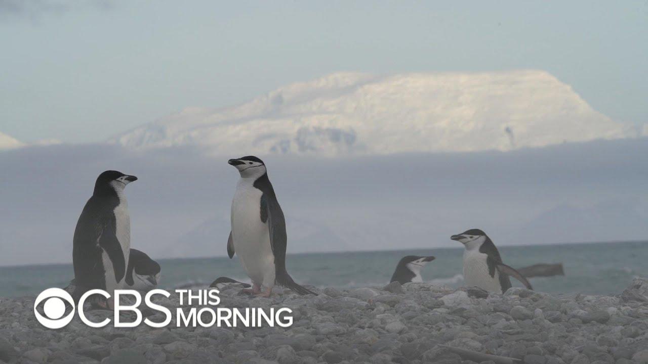 Penguin species in Antarctica hit hard by Climate Change