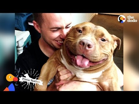 download Happy Pit Bull Dog Loves It When His Dad Babies Him | The Dodo Pittie Nation