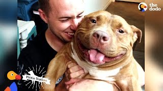 Happy Pit Bull Dog Loves It When His Dad Babies Him | The Dodo Pittie Nation