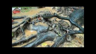 A boy Catching Fish By Hunting in Khmer|Best Fishing Videos Catch a lot Fish Rice Fields|How To Fish