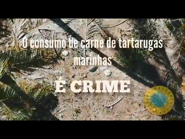 Cemitério de tartarugas marinhas é encontrado na Península de Marau, na Bahia