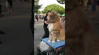 Troll Animal Funny Compilation 2019
