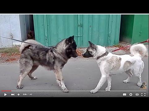 Причины острой боли у собаки или когда собака визжит
