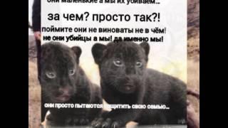 Клип в защиту животных
