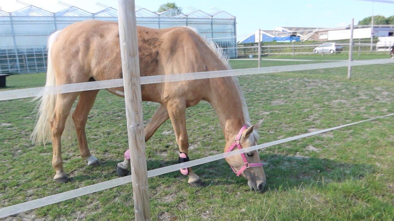 Hitte! Paardjes meer vrij - Weekvlog - * Hart voor Paarden *