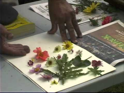 Pressing plants a simple way to dry flowers youtube pressing plants a simple way to dry flowers ccuart Image collections