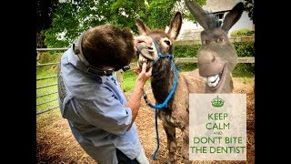 Keep Calm and Don't eat the Dentist! - Vlog