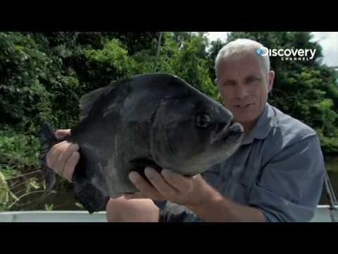 Amazon Apocalypse | River Monsters 6
