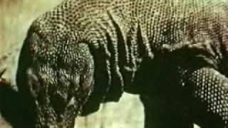 Комодосский варан