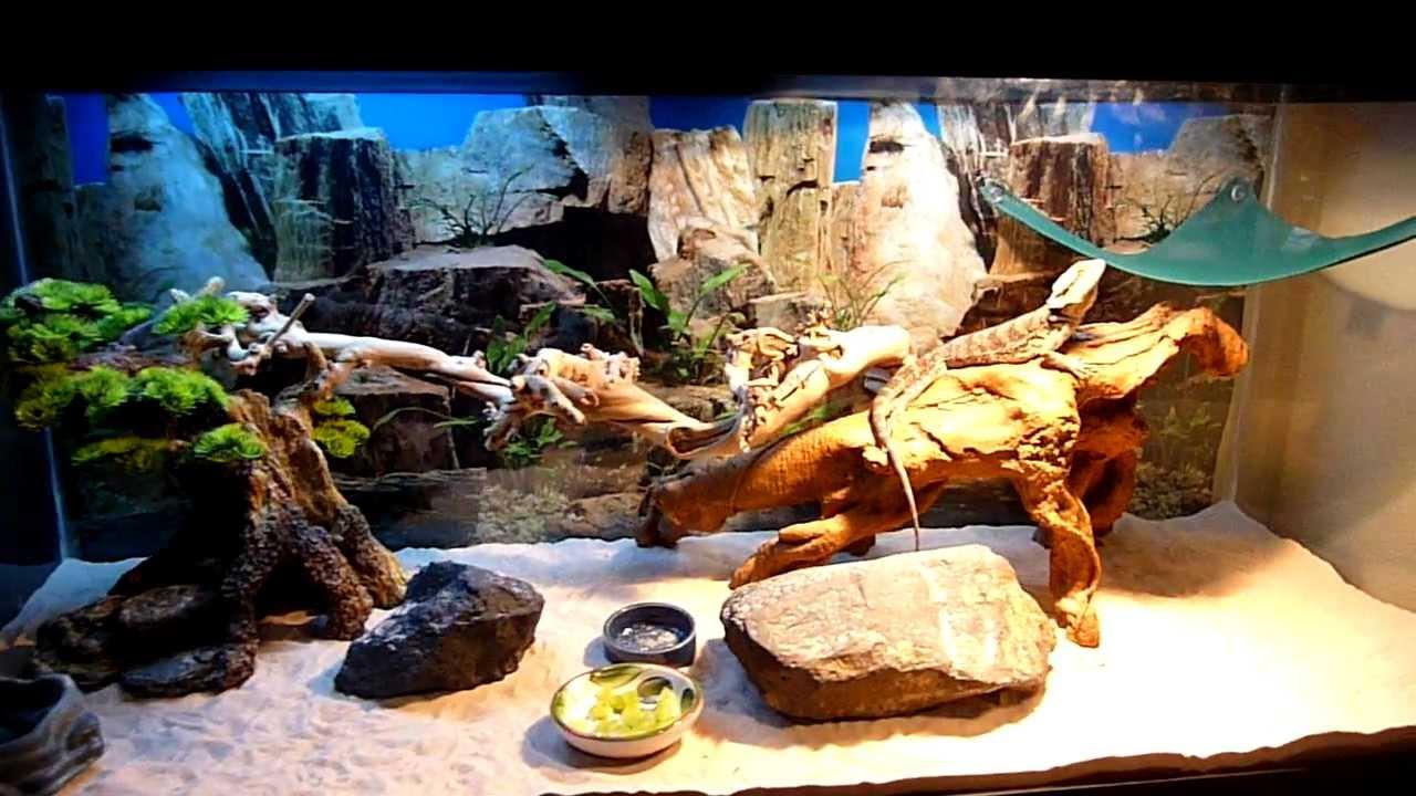 PetStore Employees Bearded Dragon setup - YouTube - photo#6