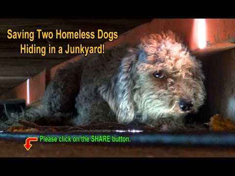Saving Two Homeless Dogs Hiding in a Junkyard!  Please SHARE so we can find them a home together